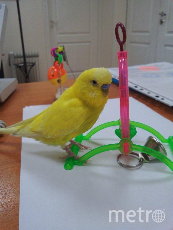В нашем офисе живет попугай Зеня…очень вежливый мальчик. Фото Альбина Полищук.
