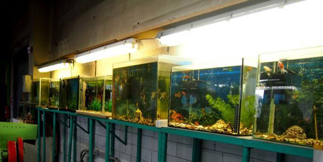 Рыбки в офисе – вещь довольно привычная. А вот в автобусном парке № 2