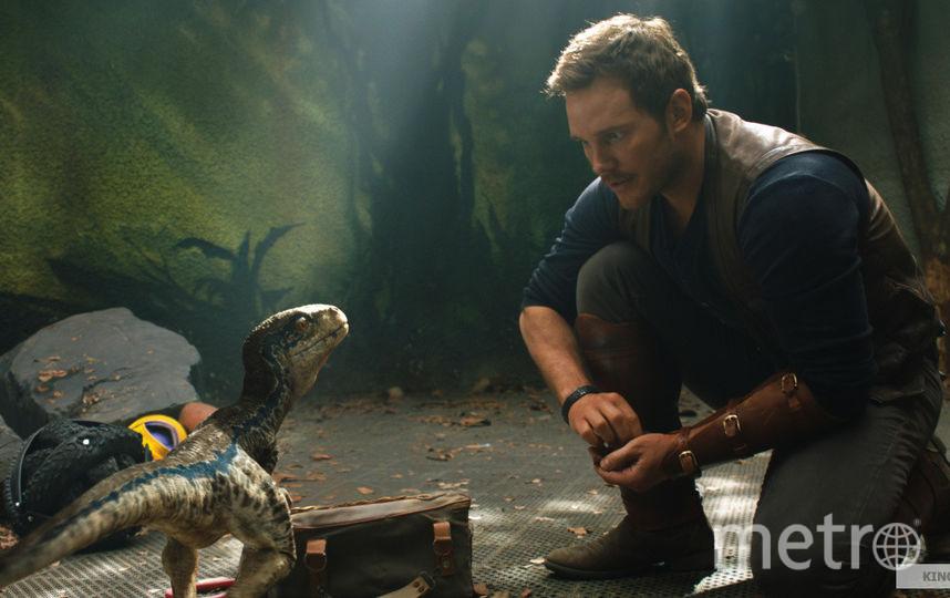 Герой Криса Пратта Оуэн приручает раптора Блю. Фото UPI