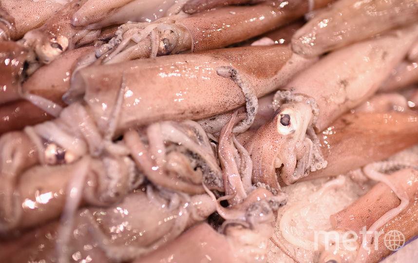 Кальмары. Фото Getty