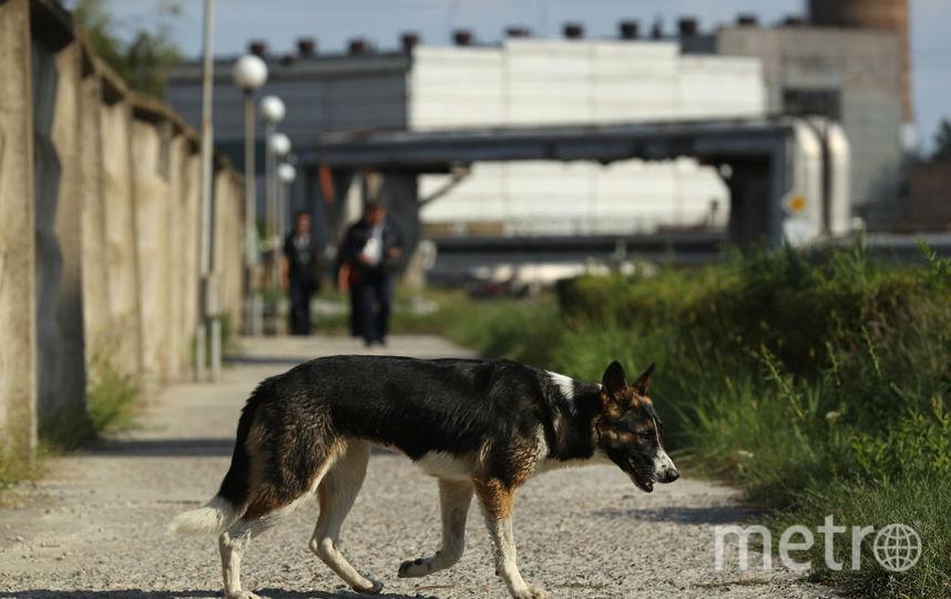 На юго-востоке Москвы объявили карантин из-за бешенства. Фото Getty