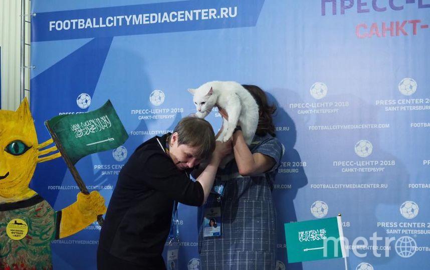 """Кот-оракул Ахилл сделал первый выбор. Фото Святослав Акимов, """"Metro"""""""