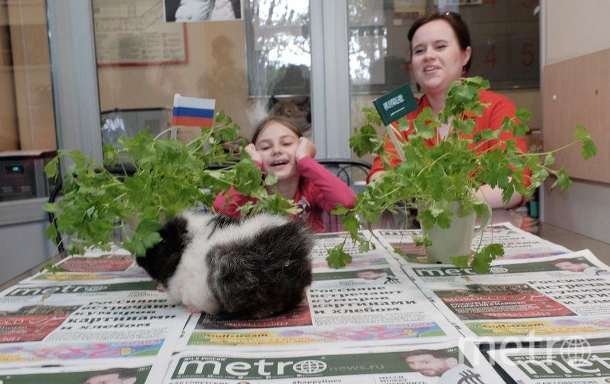 """Морская свинка, живущая в редакции Metro, дала свой прогноз. Фото Алена Бобрович., """"Metro"""""""
