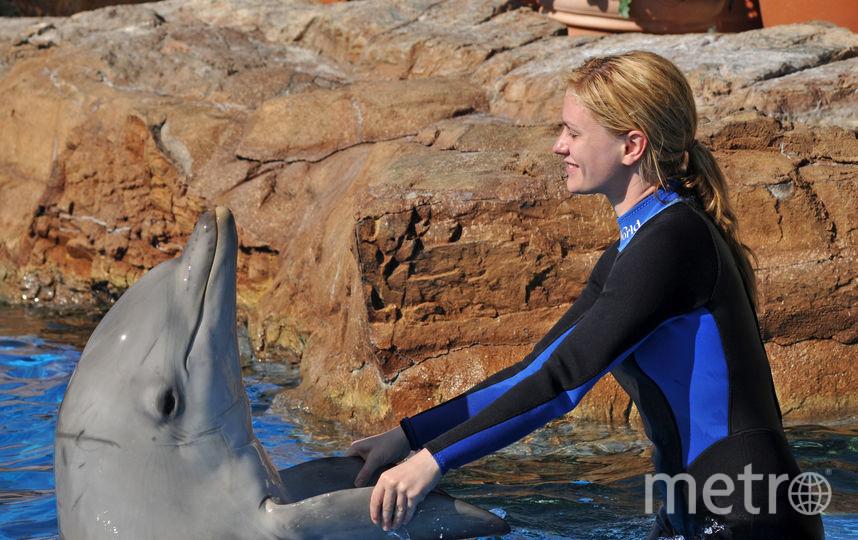 Самка дельфина родила прямо во время водного шоу. Фото Getty