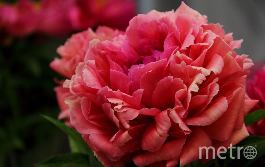 В Ботаническом саду. Фото vk.com/botsad_spb, vk.com