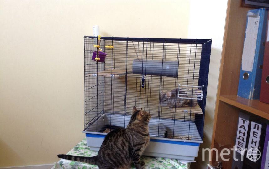 """Наша фирма - """"чемпион"""" по офисным животным: кот Версик, семейство красноухих черепах: Альф, Рафаэль, Торти, Черри, Чапа, шиншилла Шило, аксолотль Вайт."""