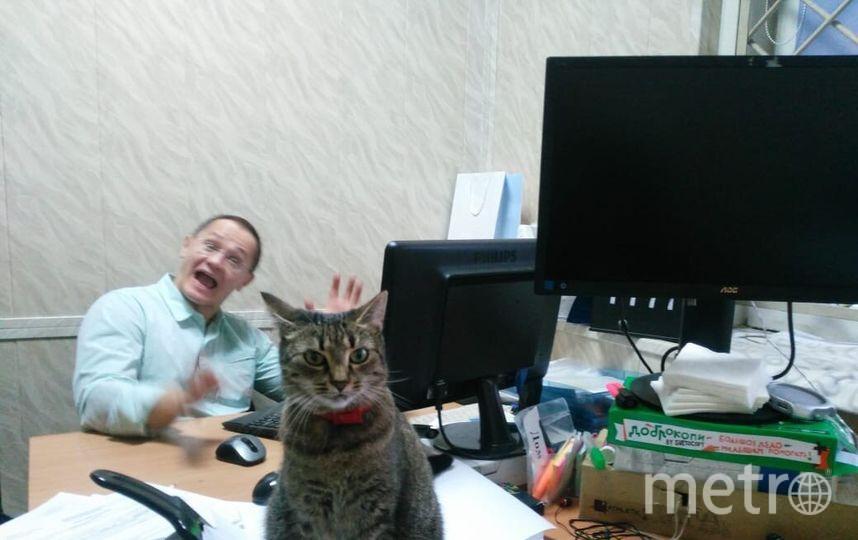 Животное в офисе — лучшее объединение коллектива, снижение уровня стресса, да и просто хорошее настроение каждый день. Благодаря появлению кошки Цапы сначала на лестнице, а потом и в офисе компании «Четыре глаза», все отделы сплотились. Каждый участвует в судьбе нашей пушистой коллеги, а она в свою очередь держит хвост телескопом и наблюдает за каждым!.