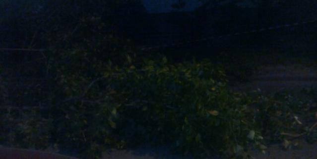 Падение ветки на ул. Белы Куна.