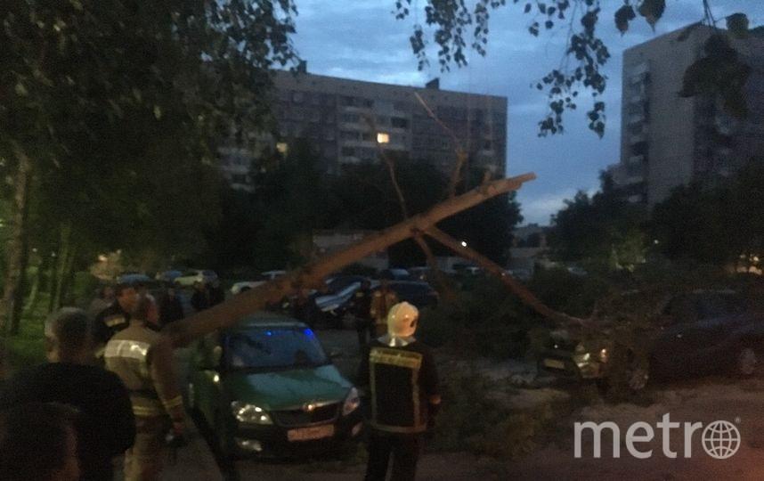 На улице Чудновского. Фото vk.com/spb_today., vk.com