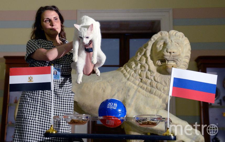 Кот Ахилл предсказал победу сборной России в матче с Египтом. Фото AFP