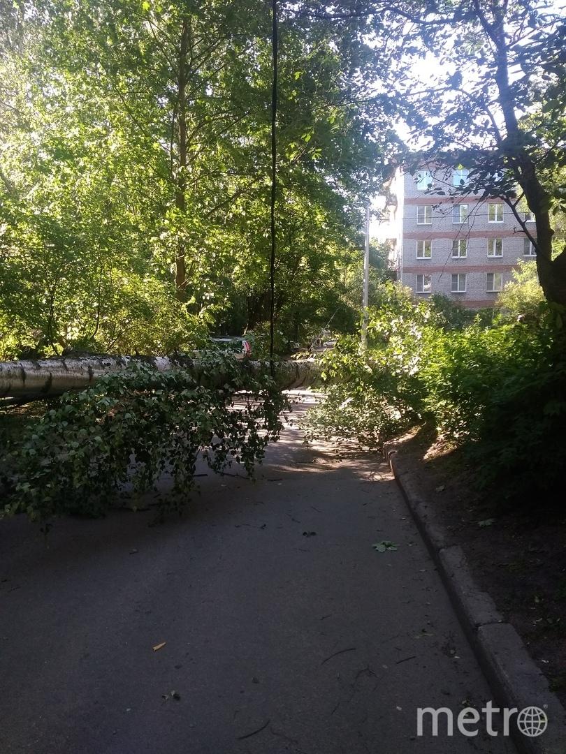 На проспекте Тореза. Фото vk.com