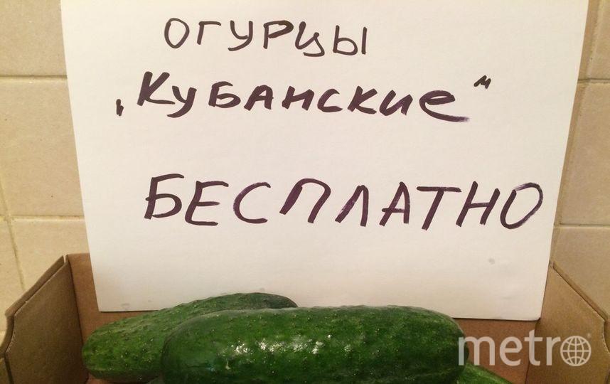 Краснодарские фермеры бесплатно раздадут огурцы в Петербурге. Фото Предоставлено организаторами