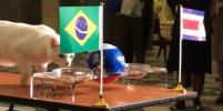 Ахилл сделал прогноз матча Бразилия - Коста-Рика