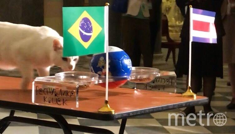 Республика кошек. Фото vk.com