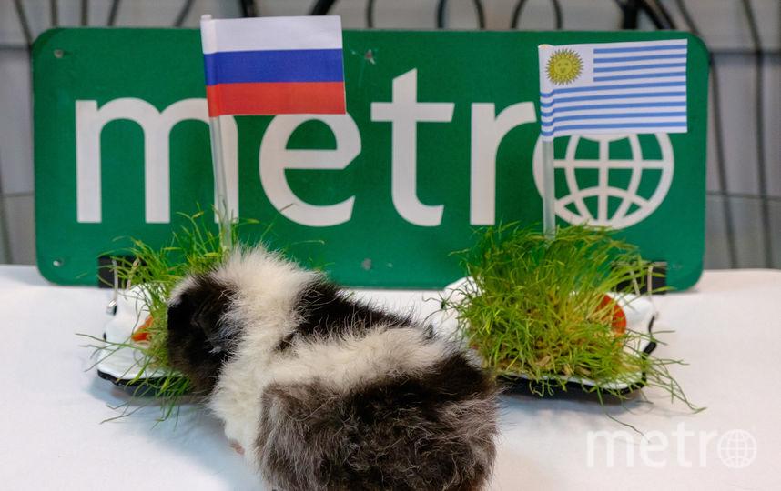"""Россия - Уругвай: оракул Metro сделал свой выбор. Фото Алена Бобрович., """"Metro"""""""