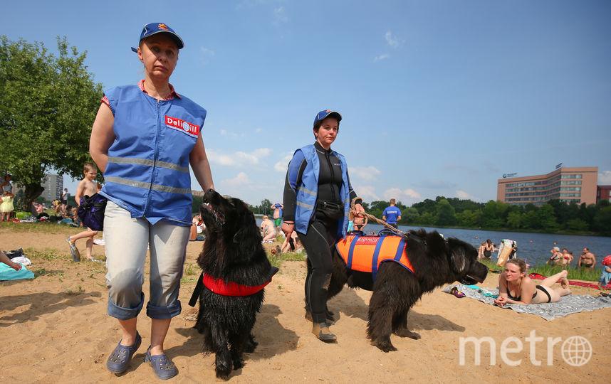 Как четвероногие спасатели патрулируют пляжи Москвы. Фото Василий Кузьмичёнок