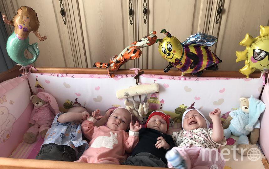 """Один сыночек и три лапочки-дочки: малышам уже исполнилось  восемь месяцев. Фото предоставлено Еленой Гончар, """"Metro"""""""