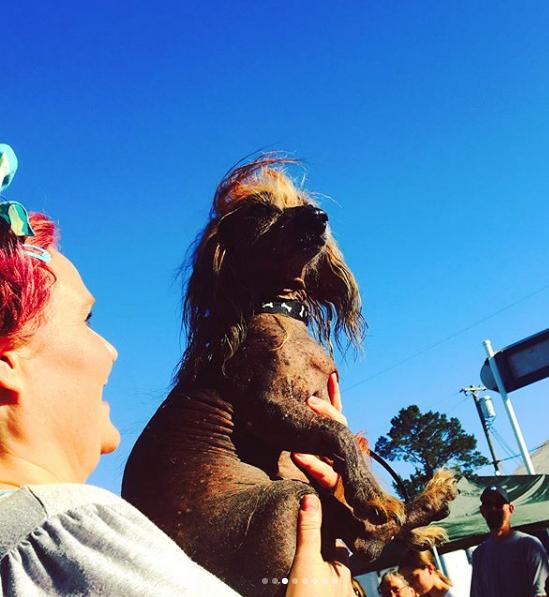"""Конкурсанты смотра """"Самая уродливая собака в мире"""". Фото https://www.instagram.com/cherryslush1966/"""