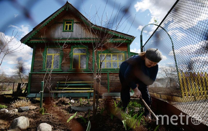 Москвичи смогут проголосовать недалеко от своих дачных участков. Фото РИА Новости