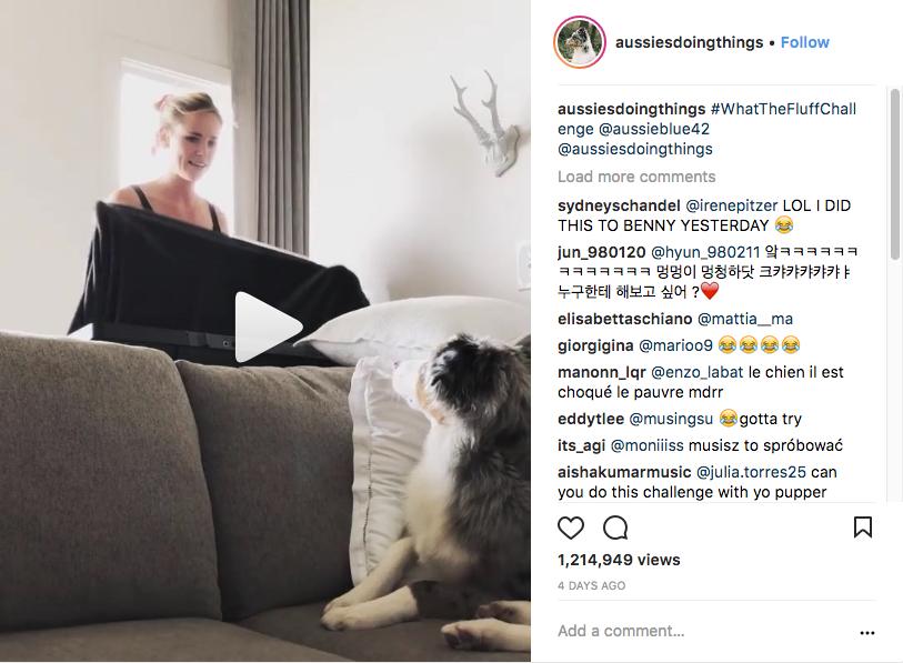 В соцсетях появляется всё больше видео, на которых владельцы собак разыгрывают своих питомцев. Фото Скриншот Instagram: aussiesdoingthings
