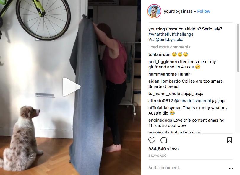 В соцсетях появляется всё больше видео, на которых владельцы собак разыгрывают своих питомцев. Фото Скриншот Instagram: yourdogsinsta