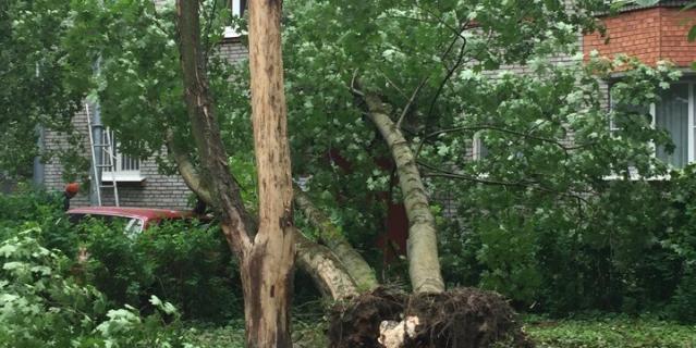Ветер валил деревья, срывал крыши с домов, рушил конструкции.