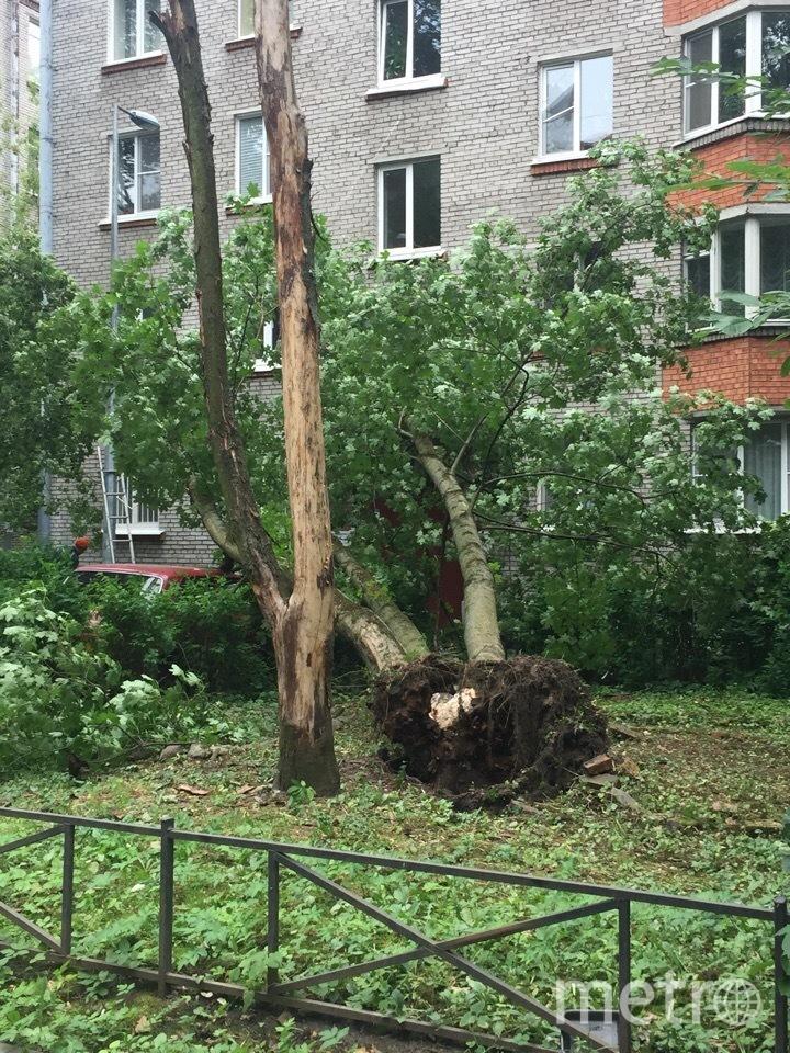 Ветер валил деревья, срывал крыши с домов, рушил конструкции. Фото https://vk.com/spb_today, vk.com