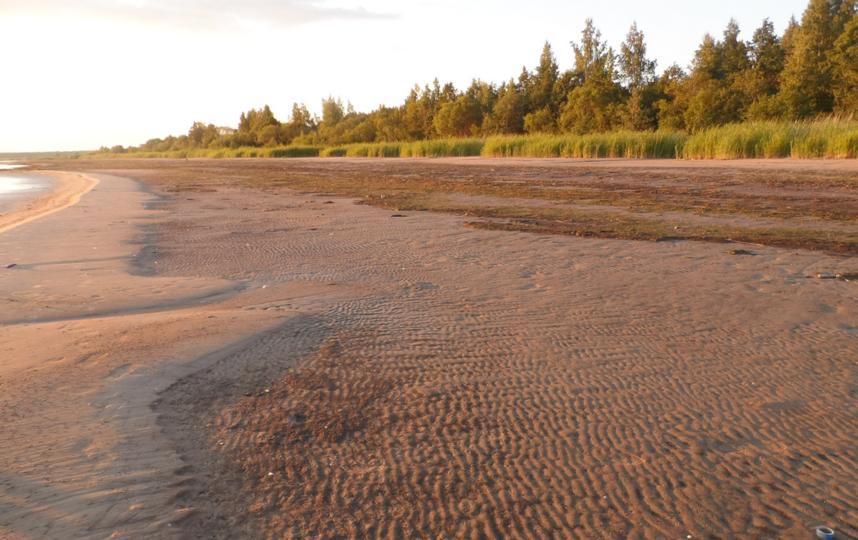 "Финский залив, Кургальский заказник. Фото ""Metro"""