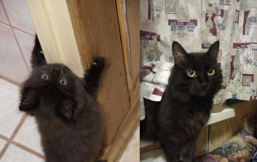 Это наш кот Томас. В детстве мы с сестрой всегда просили кота, но папа говорил, что у него якобы аллергия. Также не покупал нам велосипед, из опасений, что мы покарябаем обои. Сейчас кот (10 лет) - лучший друг папы, и без него мы не представляем своей жизни. Многие стены покрыты плиткой по уровень, куда достает кот, повсюду висят когтеточки. Всё делается для кота. Фото Елена