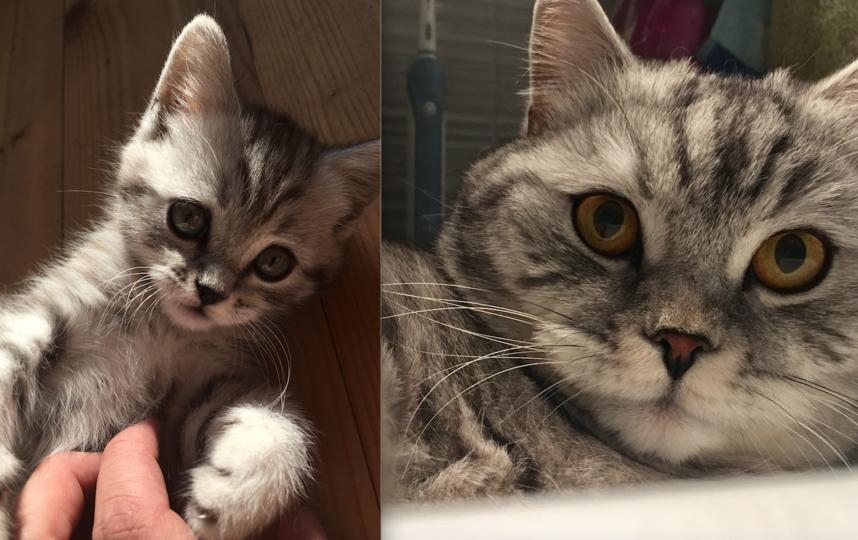 Это наш кот Том. С виду - плюшевая игрушка с медовыми глазками, но стоит ему разыграться, просыпается ЗВЕРЬ! Ещё и селфи научился делать. Фото Андрей