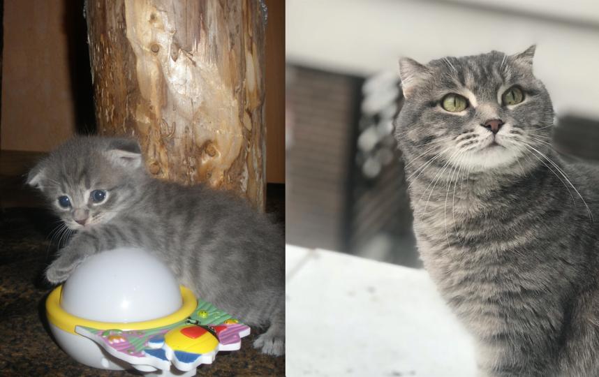 Маруся 1,5 месяца и 9 лет. Фото Ксения
