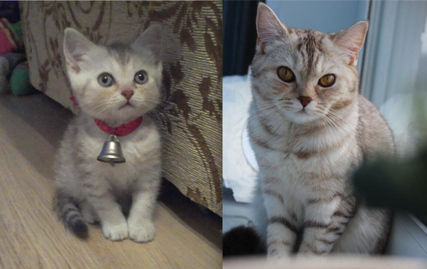 На фото моя кошка Буся. С детства любознательная и своенравная. В июне ей будет 4 года. Очень меня любит, а я её. Фото Карина