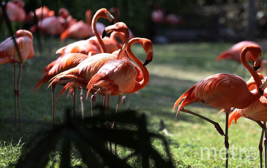 Фламинго. Фото Getty