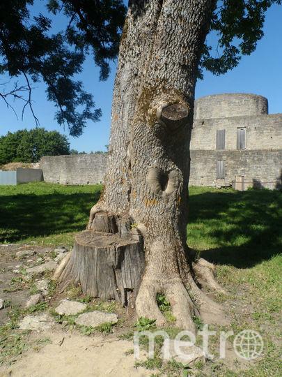 """Деревянное сердце, которое поможет найти свою судьбу, если приложить ладонь. Фото Наталья Сидоровская, """"Metro"""""""