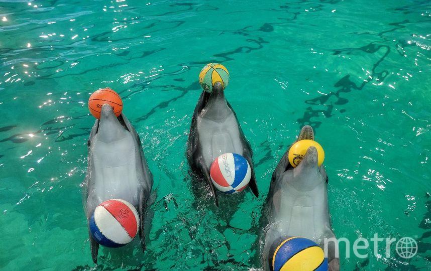 """Дельфин Куплет - любимец публики. Фото Алена Бобрович, """"Metro"""""""