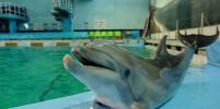 Дельфина, рожденного в неволе в Петербурге, воспитали белуха и морж
