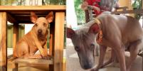 Что выросло, то выросло! Подборка забавных фото собак и кошек