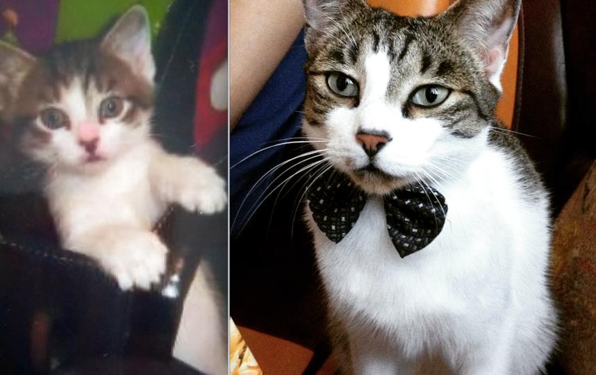 Кот Кузя. Слева 1 месяц,справа 5 лет. Фото Кузнецова Наталья Константиновна