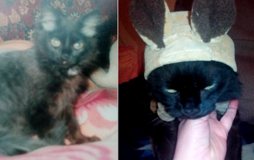 Породы нет, зовут кошечку Асальда, ей 11 лет. Фото Плохая Любовь Леонидовна