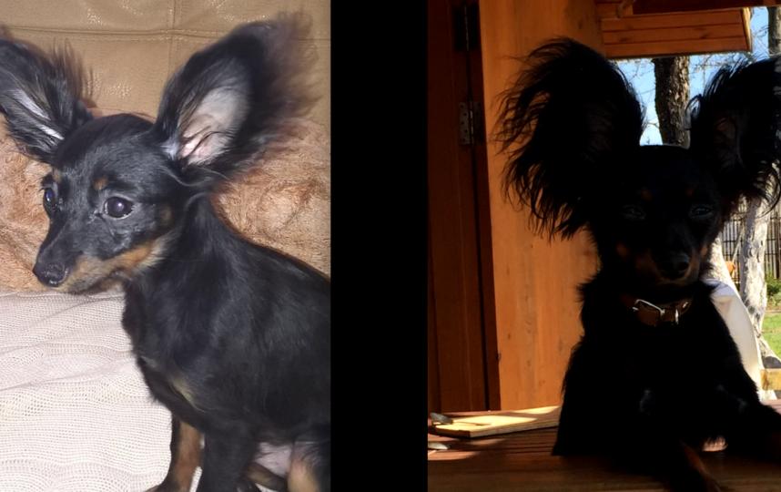 Питаний Геракл ( Гера) на первом фото 5 месяцев, сейчас 1 год 10 месяцев. Фото Запивохина Светлана