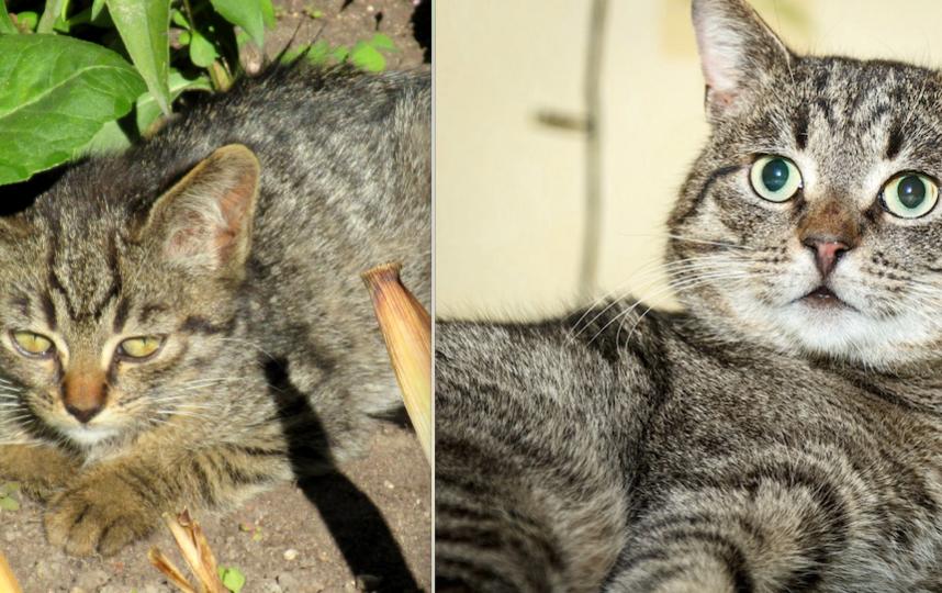 Зовут моего котика Бульвар сокращенно Буля. В этом году нам будет 4 года.. Фото надежда куличкова