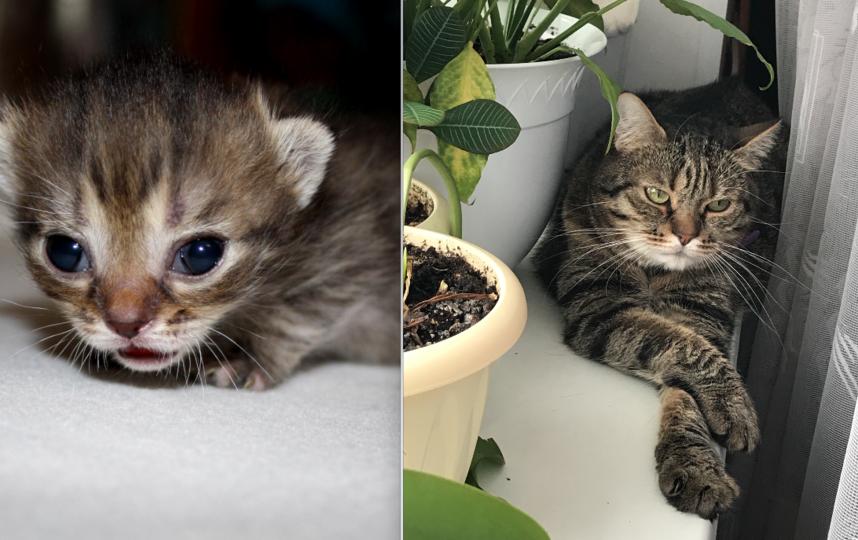 Это наш кот Степан. Своим можно просто Степа. На первом фото ему почти 4 недели, сейчас ему 5 лет. Фото Оксана Трофименко