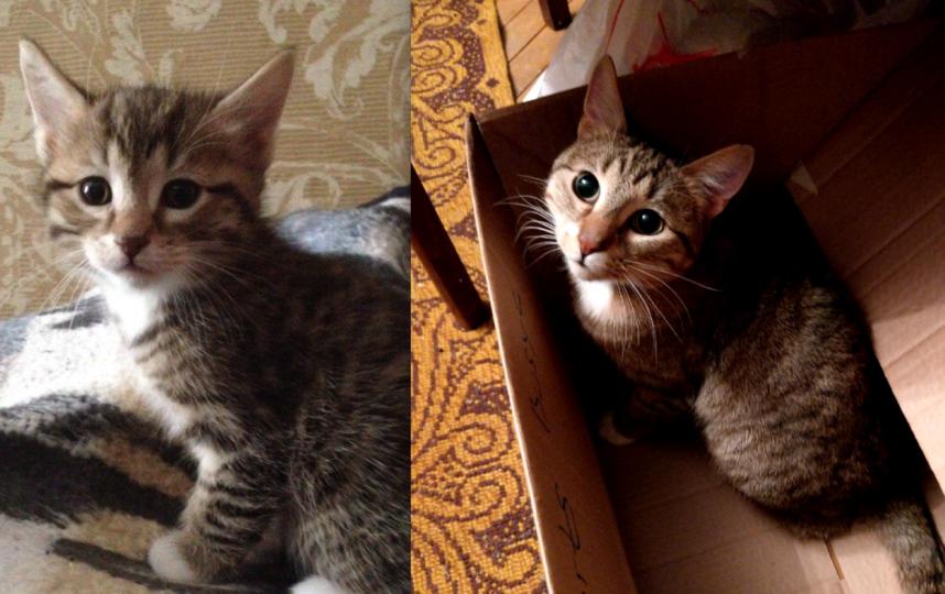 Обычный котик, без породы. Зовут Эш, сейчас ему 1 год и 4 месяца. Фото Дробышевская Вероника
