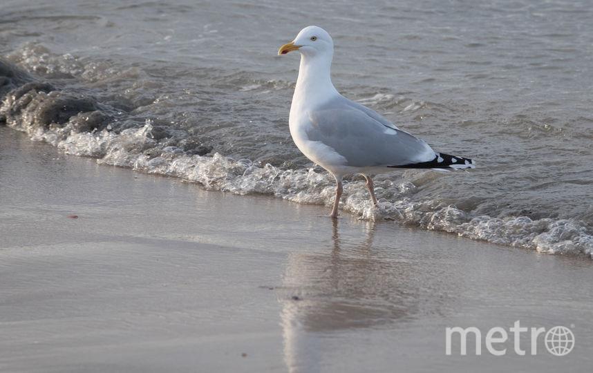 Чайка. Фото Getty
