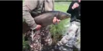 Урок жизни от Шойгу: видео с выпущенной в реку рыбой обсуждают в Сети