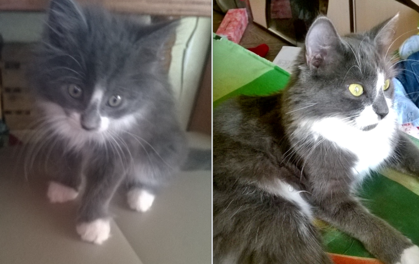 Это наша любимица Пушинка-Соня,обычная кошка ,сейчас ей один годик. Фото Николаева Екатерина Викторовна