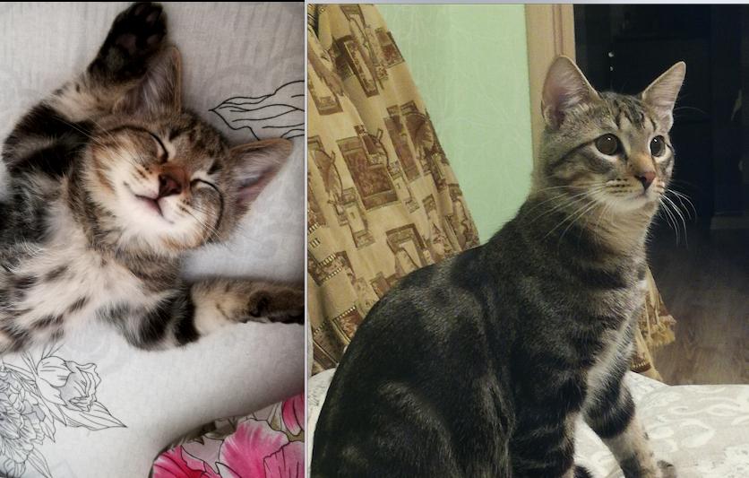 Наш кот Тимофей Егорович, беспородистый - двортерьет =) Сейчас нам уже 1 год. Фото Екатерина Федорищенко
