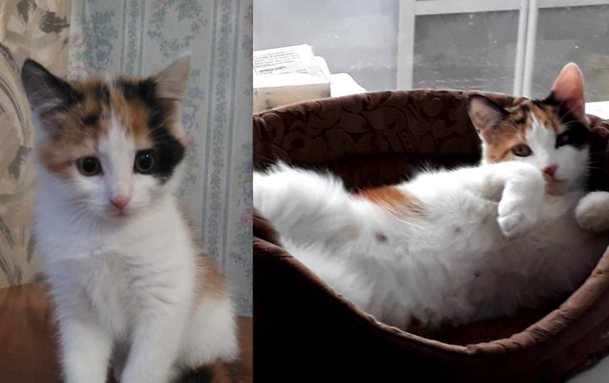 кошка Бусинка, порода- метис))дворянская чистокровная!) возраст: 10 месяцев. Фото Шахтиева Анна
