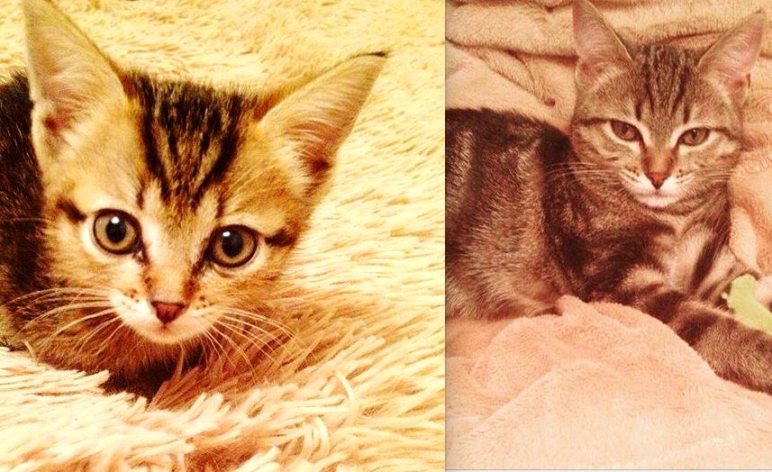 Меня зовут Жигаловская Ольга.Мою кошку зовут Муся. На данный момент нам всего 5 месяцев,беспородные мы.Подобрала на вокзальной станции.Это была любовь с первого взгляда.