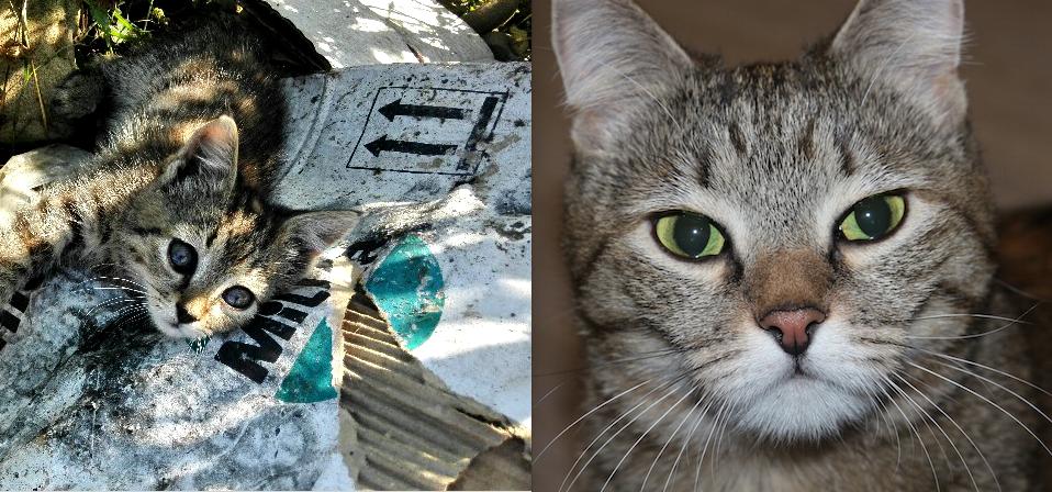 Это, Фрося. Была найдена на помойке, три года назад,на Северном Кавказе. Сейчас живёт в Петербурге и радует нас. Петухов Денис.